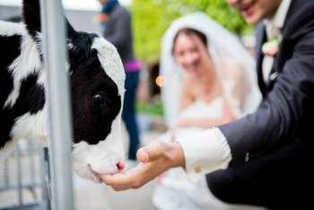 weddingr-3, wedding